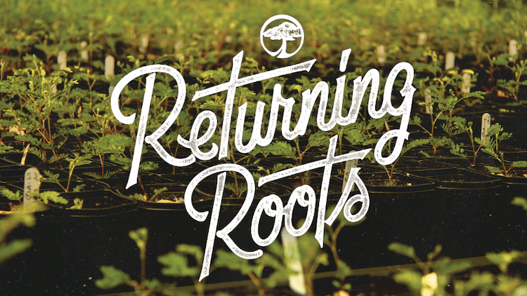 Returning Roots! Arbor Collective macht es vor